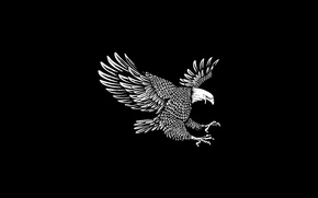 Picture bird, feathers, eagle