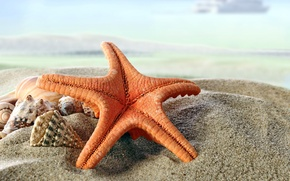 Wallpaper paradise, shore, seashells, blue, sea, beach, sea, sand, sand, shore, beach, shell, summer, starfish