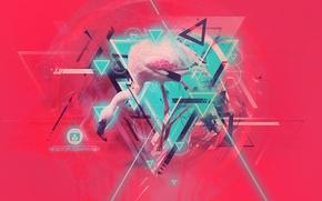 Picture light, line, animal, bird, Wallpaper, triangles, color, Flamingo, bird, desktopography, flamingos