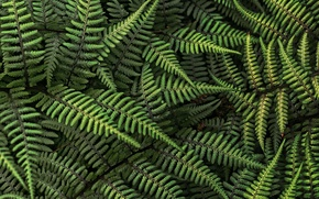 Picture forest, leaves, fern