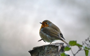 Picture leaves, background, bird, stump, branch