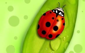Wallpaper sheet, figure, beetle, point, Green