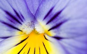 Wallpaper pollen, AMC, purple