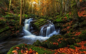Picture threads, stones, France, Auvergne, trees, moss, excerpt, foliage, water, forest, stream, autumn, region