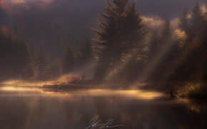 Picture autumn, forest, light, nature, morning, haze, pond