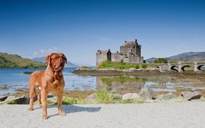 Picture landscape, bridge, Scotland, Scotland, Dornie, Dogue de Bordeaux, Eilean Donan Castle, Dorn, Eilean Donan Castle