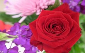 Picture macro, rose, Bud, red rose, bokeh