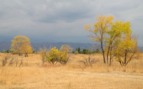 Picture field, autumn, the sky, grass, trees, mountains, clouds