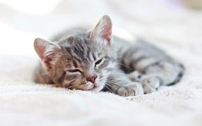 Picture cat, sleeping, cat, sleep, kittens
