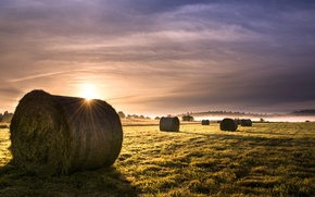Picture field, fog, morning, hay
