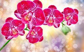 Picture glare, background, orchids, rays of light, bokeh, closeup