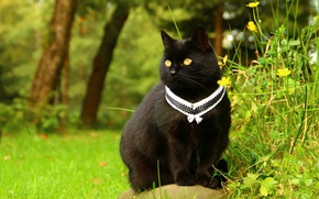 Picture greens, cat, grass, cat, look, flowers, nature, background, black, garden, collar, decoration, sitting, yellow eyes