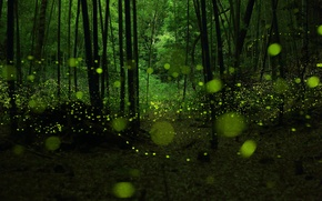 Picture forest, fireflies, twilight, bokeh