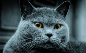 Wallpaper saw, someone, grey, cat