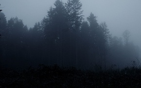 Wallpaper the darkness, fog, trees, forest