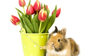 Picture photo, Flowers, Rabbit, Tulips, Animals