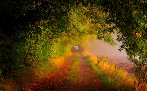 Picture road, field, autumn, forest, leaves, trees, nature, colors, colorful, forest, road, trees, field, nature, autumn, …
