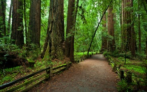 Picture forest, trees, the fence, CA, path, national Park, Redvud