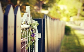 Picture flowers, widescreen, HD wallpapers, Wallpaper, fence, greens, full screen, flower, the sun, the fence, background, ...