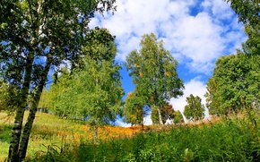 Picture summer, grass, trees, nature, photo, birch, Khakassia