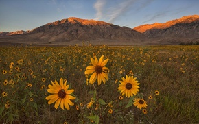 Picture field, flowers, mountains