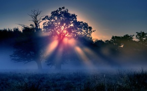 Picture the sun, rays, trees, nature, morning mist