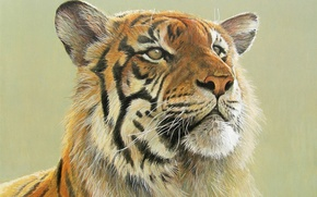 Picture tiger, art, big cat, Robert Bateman