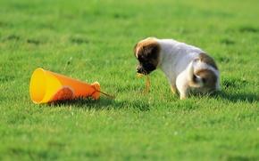 Picture grass, dog, puppy, grass, puppy, dog, 1920x1200