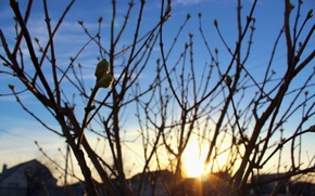 Picture the sky, the sun, sunset, branches, tree, home