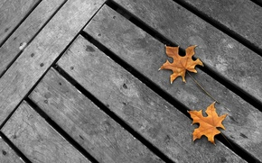 Picture autumn, grey background, yellow maple leaves, minimalism. grey Board