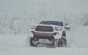 Picture winter, snow, white, Toyota, pickup, snow, pickup, TRD, Tacoma