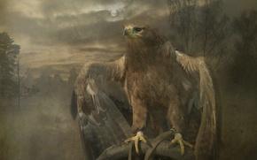 Wallpaper look, bird, predator, beak, claws