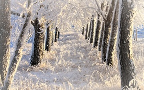 Picture frost, Winter, alley