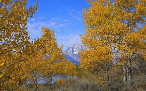 Picture autumn, the sky, leaves, trees, mountains, Wyoming, USA, grand teton national park