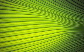Picture macro, sheet, Palma, the palm leaf