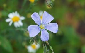 Picture flower, macro, plants
