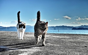Picture MOUNTAINS, HORIZON, The SKY, SAND, TAIL, CLOUDS, SHORE, DAL, PEBBLES, CATS