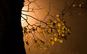 Picture leaves, light, tree