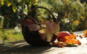 Picture autumn, leaves, Apple, bokeh, basket, composition