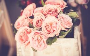 Wallpaper flowers, petals, pink
