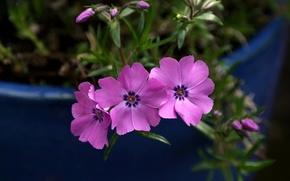 Picture macro, plant, petals