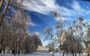 Picture winter, snow, trees, nature, photo