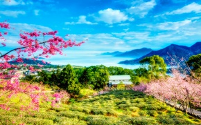 Picture greens, the sky, clouds, trees, landscape, flowers, mountains, spring, Sakura, China, Taiwan