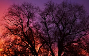 Picture the sky, trees, sunset, nature, widescreen