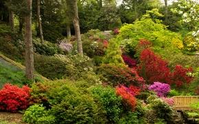 Picture trees, flowers, Park, garden, UK, the bushes, Azalea, Bodnant Gardens Wales