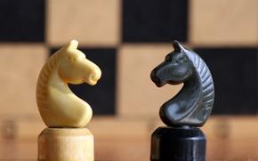 Picture horse, white, black, chess, figure
