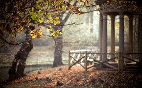 Picture leaves, trees, nature, Park, gazebo