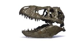Picture sake, dinosaur, tyrannosaurus rex, paleontology