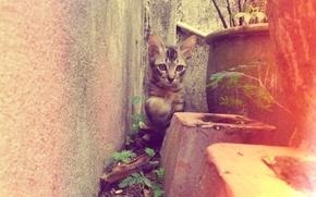 Picture yard, kitty, flowerbed, striped, kitten, cat, animal, cute, pet