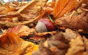 Picture autumn, leaves, macro, nature, yellow, fallen, chestnut